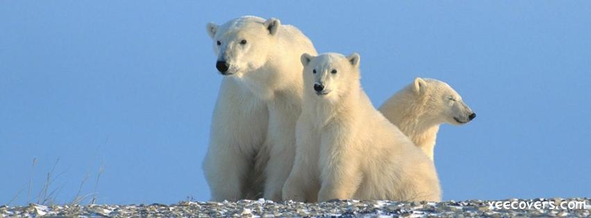 Snow Bears Family FB Cover Photo HD