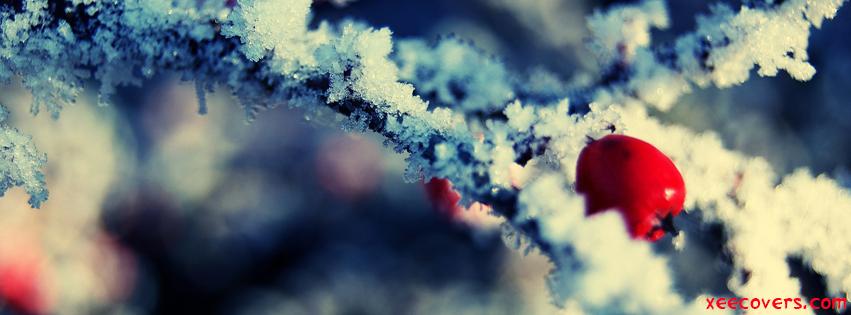 Snow Cherrys FB Cover Photo HD
