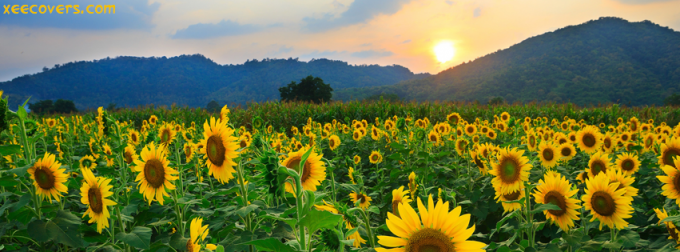Sunrise Scene With Beautiful Sun Flowers facebook cover - hd wallpaper - hd covers