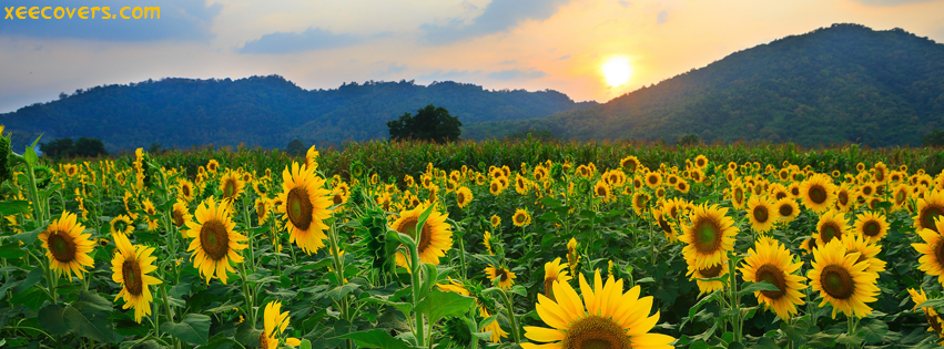 Sunrise Scene With Beautiful Sun Flowers facebook cover photo hd