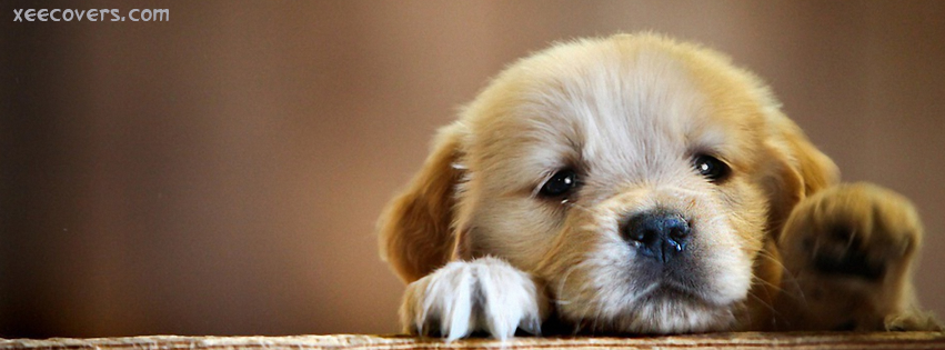 Sweet Pup FB Cover Photo HD