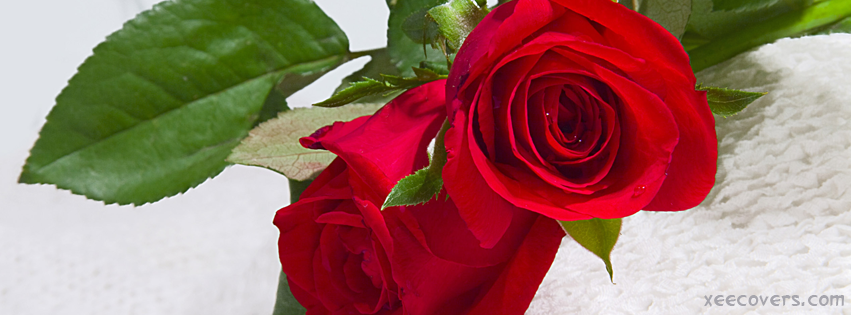 Sweet Red Roses facebook cover photo hd