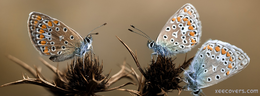 Three Butterflies On Thorns Plant FB Cover Photo HD