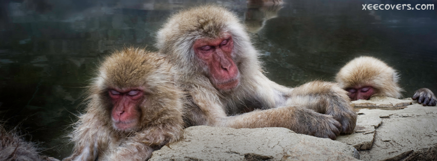Tired Baboons facebook cover photo hd