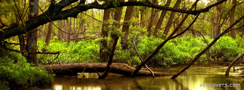 Tree Path In A Jungle FB Cover Photo HD