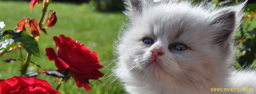 White Cat And Red Roses FB Cover Photo HD