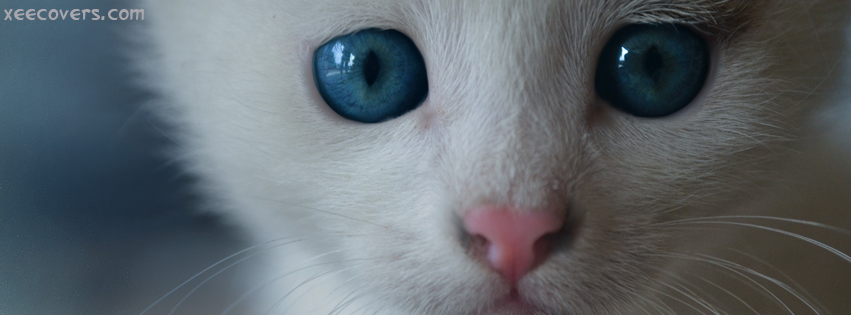 White Cat With Blue Eyes facebook cover photo hd