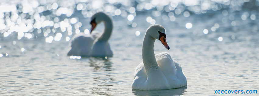 White Ducks facebook cover photo hd