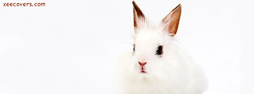 White Mouse FB Cover Photo HD