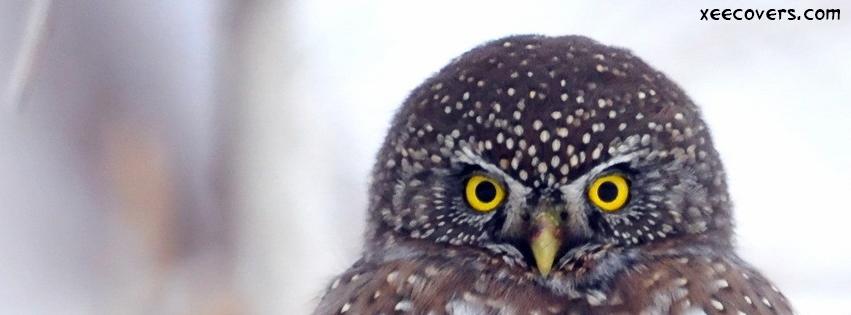Yellow Eye Owl facebook cover photo hd