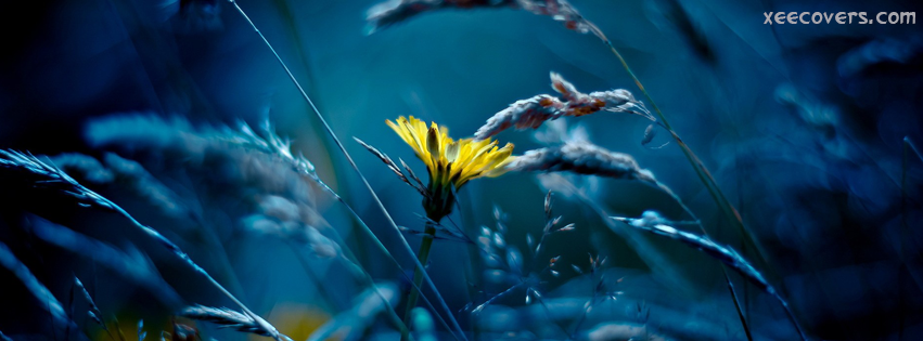 Yellow Flower And The Blue Light FB Cover Photo HD