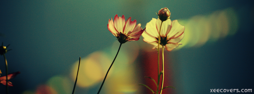 Yellow Flowers FB Cover Photo HD