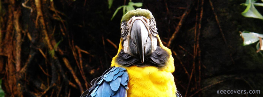 Yellow Macow Parrot facebook cover photo hd
