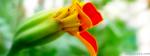 Yellowish Red Flower