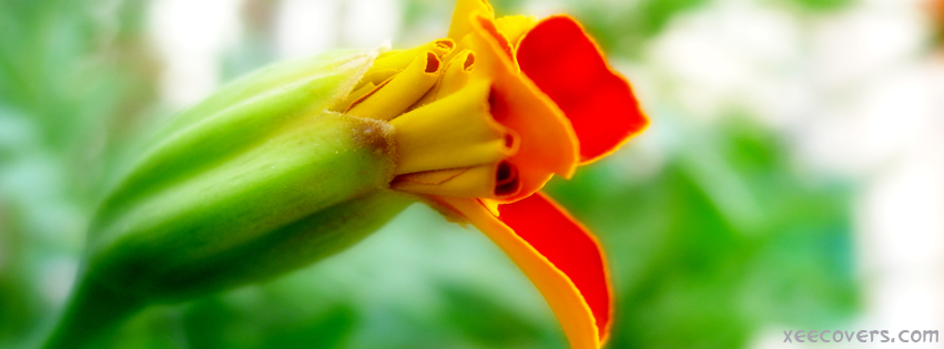 Yellowish Red Flower facebook cover photo hd