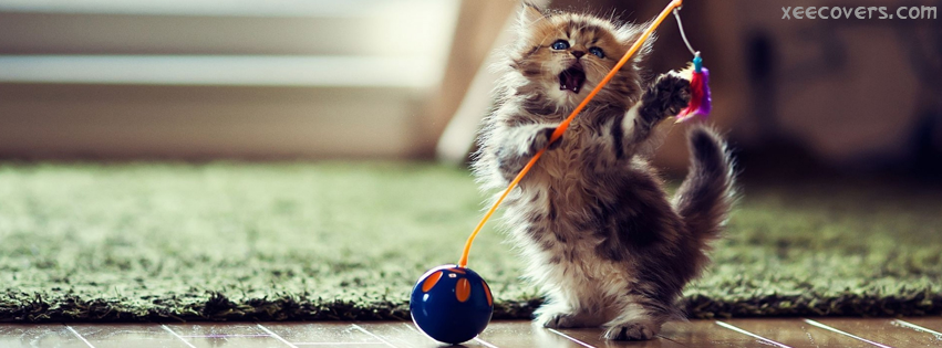 Cat Wants To Play FB Cover Photo HD