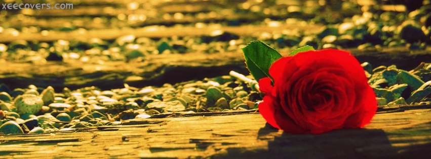 Lonely Love Rose FB Cover Photo HD