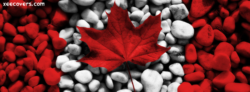 Red Leaf facebook cover photo hd