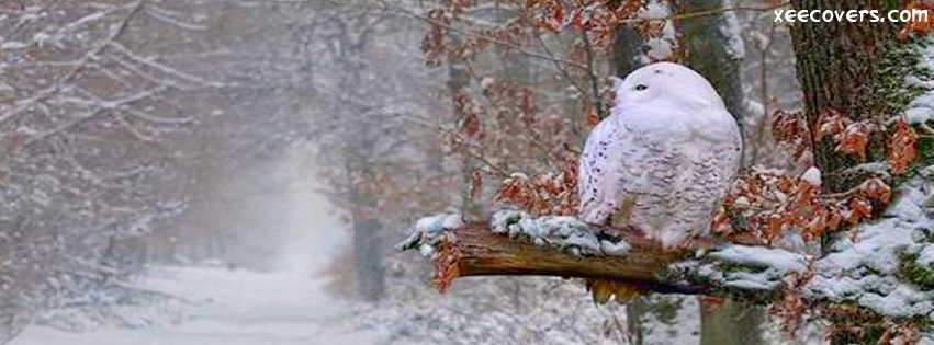 Snowy Tumblr FB Cover Photo HD