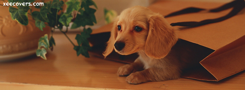Sweet Pup Gift facebook cover photo hd
